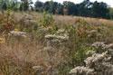 arboretum field
