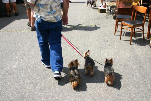 doggies