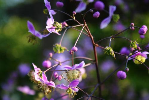 wittle flowers (title © Sarah Baker)